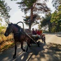 транспорт на селе! :: ольга кривашеева