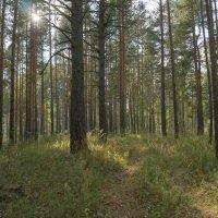 осенний лес :: Михаил Фролов
