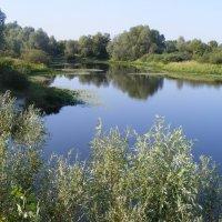Затока на реке Десне :: Александр Скамо