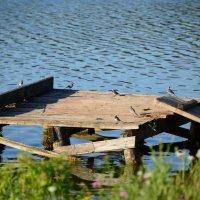 птички на пруду :: Svetlana AS