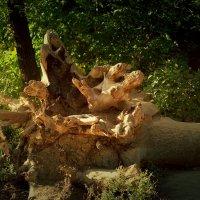 Поваленное дерево :: Александр Облещенко