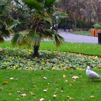Чайка в парке. :: zoja