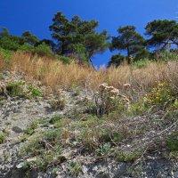 растительность на склоне :: Валерий Дворников
