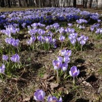 Весна :: ОЛЬГА (olinaviolina)