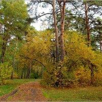осень в парке :: Сергей Швечков