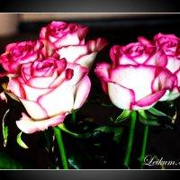 Розы. :: Александр Лейкум