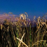 Трава скучает... :: Артём Бояринцев