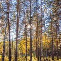 я в осеннем лесу.. :: Олег Мартоник