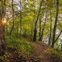 Осенний лес и солнышко в ветвях. :: Gordon Shumway