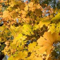 Осень :: Александр Терешин