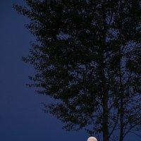 Лунная соната :: Елена Попова