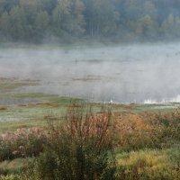 Туман на реке :: Svetlana27