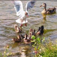 хочу стать вашей мамой!) :: linnud
