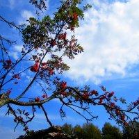 На фоне неба :: Катя Бокова