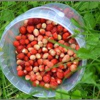 Небольшой урожайчик этим летом)) :: Мария Соколова