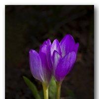 цветы осени :: gribushko грибушко Николай