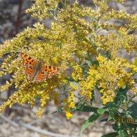 Бабочка :: Светлана Леденева