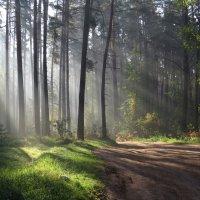 Утро  в лесу :: Ната Волга