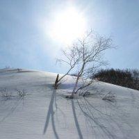 Камчатское солнце в Мае. :: Олег Романенко