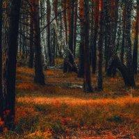 autumn :: Андрей Афонасьев