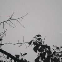 прелетная птица :: Евгения Македонская