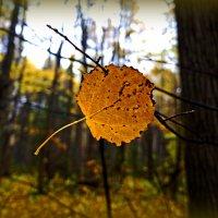 Яркими красками листья сверкают... :: Любовь Чунарёва