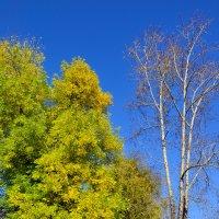 Деревья осени. :: Виталий Дарханов