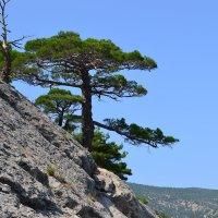 Дерево на склоне горы :: Пётр П