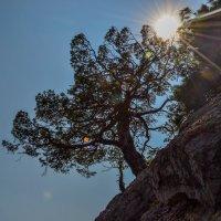 дерево по солнцем :: Пётр П