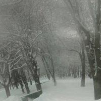 зимний лес)) минск около парка горького :: наташка клубничкина