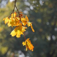 Листья на ветру.... :: Tatiana Markova