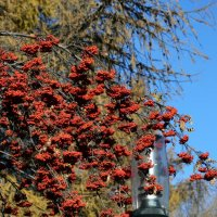 Осень в городе :: ирина