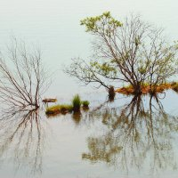Кусты в воде :: Сергей Щеглов