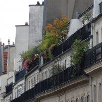 Балконы Парижа :: Svetlana27