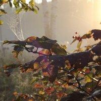 сентябрьское утро :: svetlana