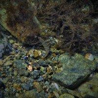 Аквариум моря-2 :: Boris Khershberg