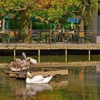 лебединое озеро :: герасим свистоплясов