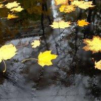 Осень... на капоте:) :: анна нестерова