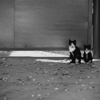 Котятки! :: Артём Брав