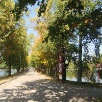 В осеннем парке :: Наталья Александрова