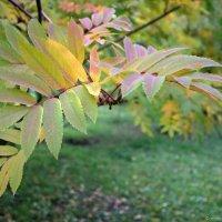 Зелёная Осень :: @ fotovichka
