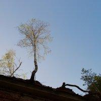 И на церквях растут дерева... :: Лилия Гудкова