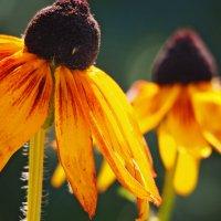 Осенние цветы :: Татьяна Губина