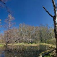 Кряжистый лес :: Юрий Кольцов