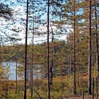 лес... озеро... :: Олег Огорельцев