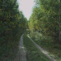 лесная дорога :: Александр Малюгин