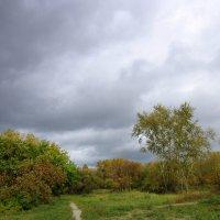 На небе тучи дождевые . :: Мила Бовкун