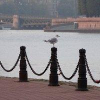 Чайка,берег и река :: Владимир Гилясев