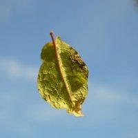 Осенний листок :: Ирина Сафонова