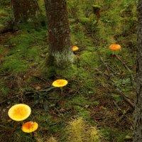 В сумраке леса :: Валерий Талашов